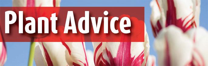 Plant Advice