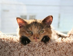Princess Cordelia spends her days soaking up sunbeams and telling us all about it.