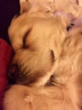 Buddy! Sleeping soundly!