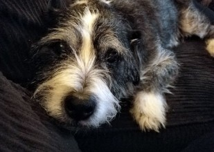 Frank is a Bassett Hound-Terrier mix. He is 14 years old, but he still acts like a puppy! He loves to cuddle and he loves treats!