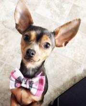 My dog, Miki!