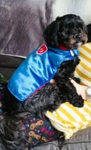 My name is Melissa Troedel and this is our Super dog Chewy!! We would like to enter him in the fantasy category of the pet contest because of his Big Super Hero dreams! It may be a fantasy for him, but we think he truly is a Super Dog!