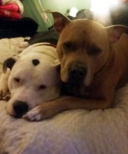 Our cute Samson and Delilah :)