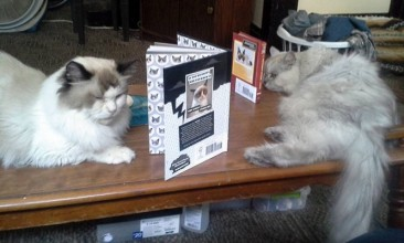 This is where my senior boys Vincent and Andy are having a cat only book club.