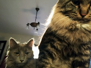This is Maude (left) and Jeffrey (right)  Jeffrey is named after 'The Dude' Jeffrey Lebowski and Maude is his special lady friend named after Maude Lebowski from the movie The Big Lebowski  Here they were waking me up looking for breakfast.  I don't know what they would have done if I haven't gotten up and fed them.