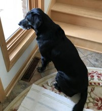 Our loyal dog Monty watches and waits for us to return home whenever he is not allowed to come along.  He always welcomes us home.