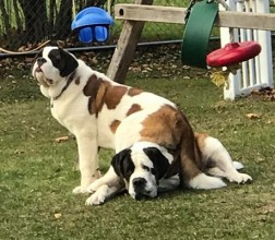 This is Gigi (top) and Rayne. Gigi is 2 & adopted at 5 months old, she is blind from birth, but shhhhhhh don't tell her she doesn't know!  Rayne is 4 and loves to run and play!