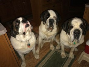 This is Gigi, Rayne and Kahlúa. Kahlúa is 6 yrs who was adopted in Jan :)