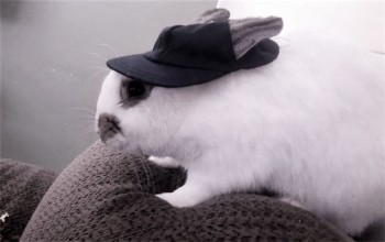 My pets name is Winston. Winston is a working bunny. On the weekdays he enjoys working at the railroad, and on the weekends he enjoys eating shredded carrots.