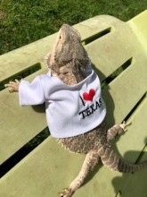 Essa is a super fun and friendly bearded dragon who loves affection by getting pet and being held!