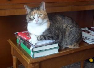 """Allie """"Book loving cat"""""""