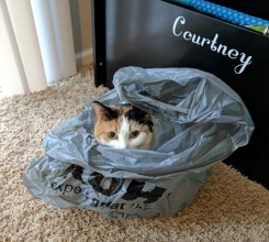 I will wait in this bag until I can ATTACK!!