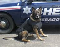 Winnebago County Police Dog